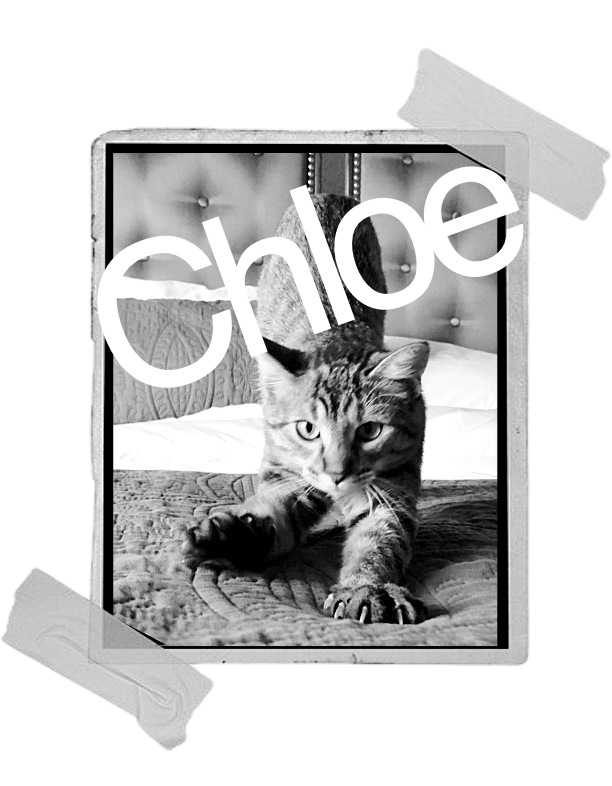 Chloe Coco Lulu Caribbean Cat & Vacation, Adventure. Escape